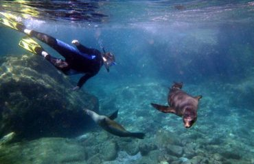 02_snorkel_sealion_pups
