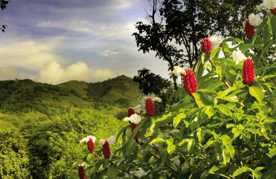 An Exploration in Nature in Costa Rica & the Panama Canal