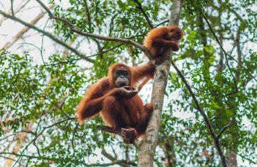 Belawan for Gunung Leuser National Park, Indonesia