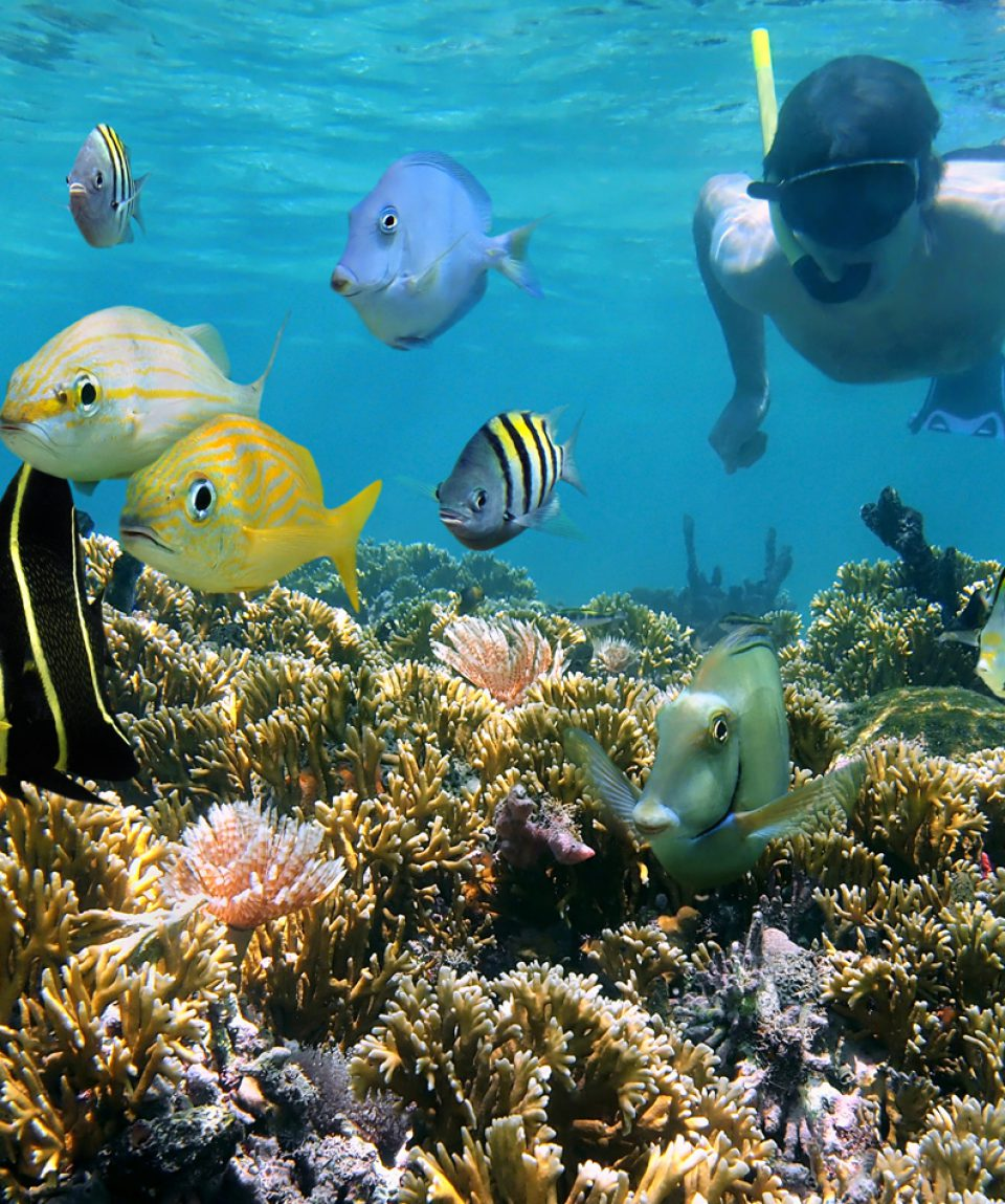 Coral reef and snorkeler