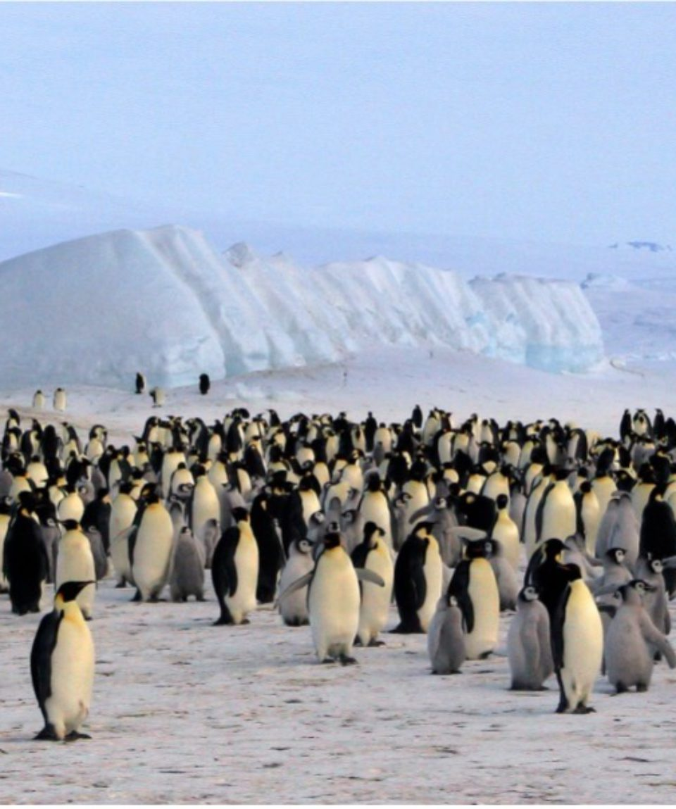 Falkland Islands, Groegia, Antarctica