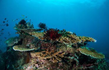 Pulau Nai - INDONESIA