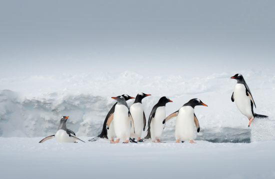 Antarctica and South Georgia Air Cruise Explor Cruises