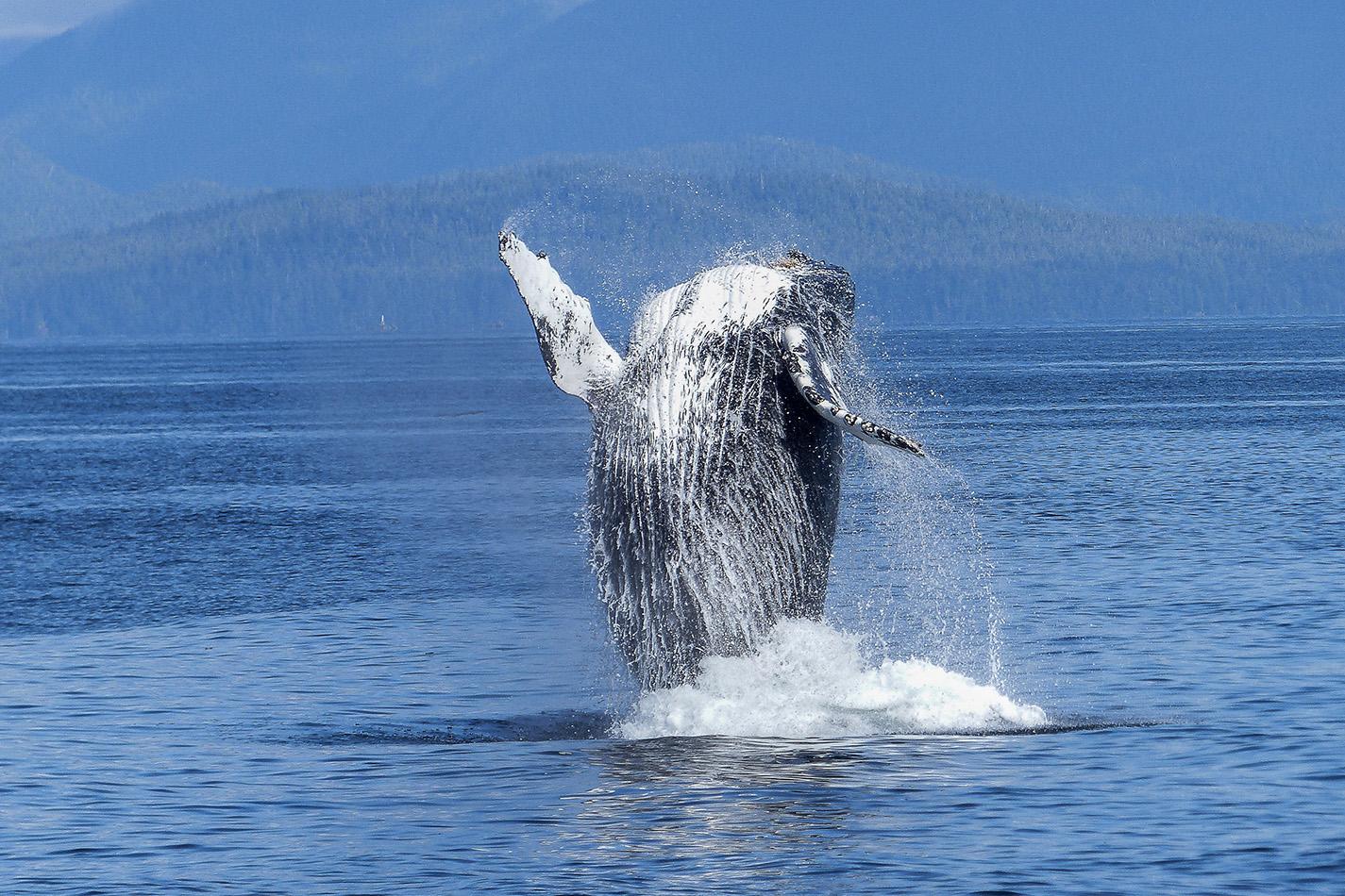Splendors of Alaska - Explor Cruises
