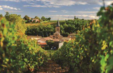 provencespain_Beaujolais_ss_147436355_vineyard_gallery