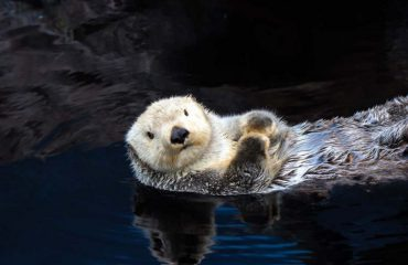silversea-luxury-cruises-alaska-sergius-narrows-sea-otter