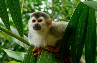 silversea-luxury-cruises-manuel-antonio-national-park-quepos-costa-rica