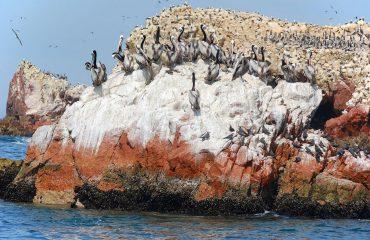 silversea-south-america-cruises-lobos-de-tierra-island-peru