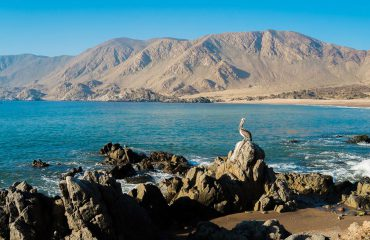 silversea-south-america-cruises-pelican-isla-pan-de-azucar-chile