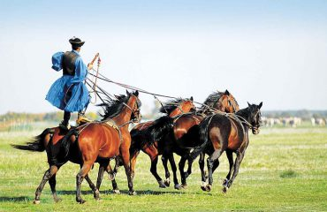 HUNGARIAN HORSE SHOW