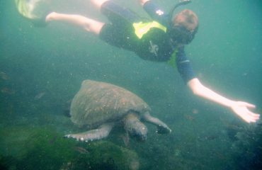 Swim with sea turles