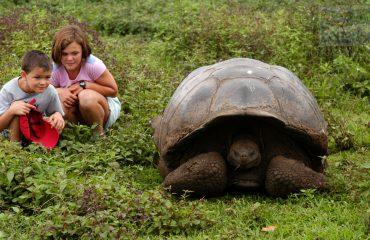 Santa Cruz - Giant Land Tortoise