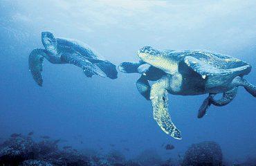 TORTUGAS - Galápagos