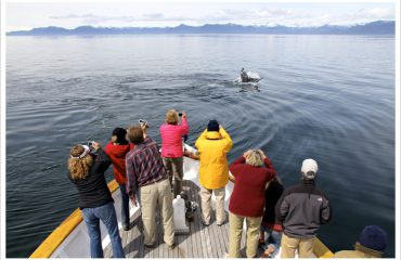 Alaska-whale-watching-MV-Discovery