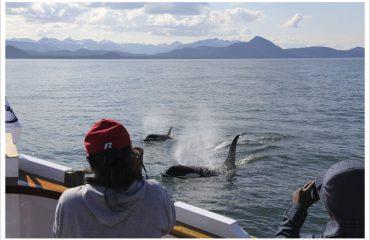 Whale-watching-Alaska-Orca