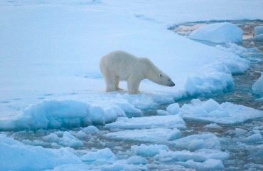 polar-bear_beaufort-sea_noaa-national-ice-center