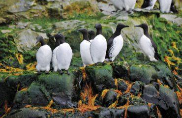 ecm-253828-cape-florens-wrangell-island