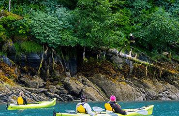 370x278-AK-Kayaking_Baranof_Island_bald_eagle_Wolfgang_Kaehler