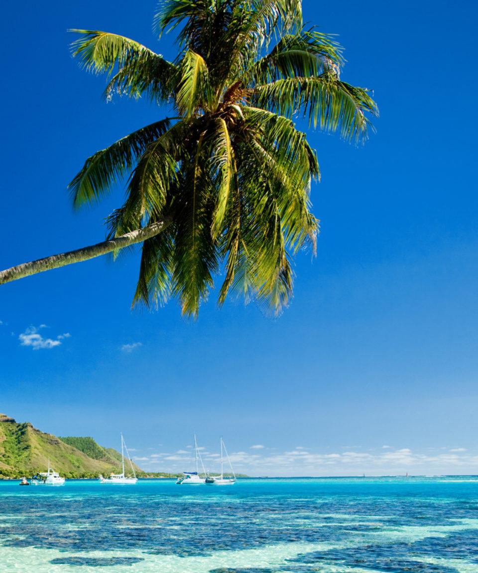 Palm tree hanging over stunning lagoon